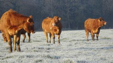 Le froid des derniers jours vu par les éleveurs