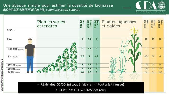 Abaque pour estimer la quantité de biomasse des plantes