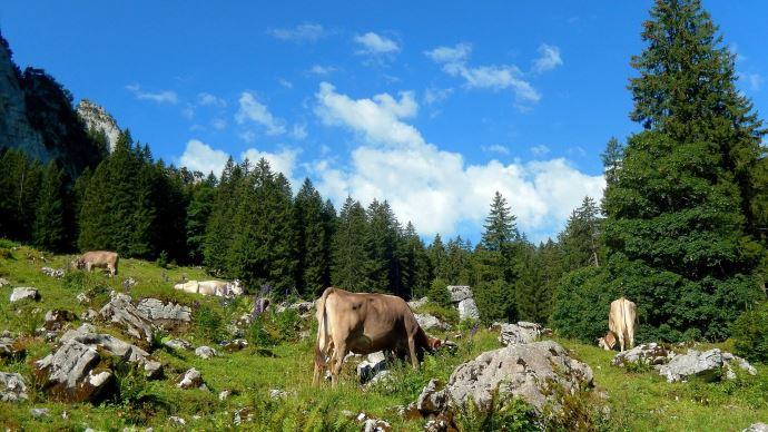 47 parlementaires ont lancé un appel à soutenir l'élevage de montagne dans la future Pac, le 17 février