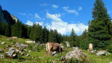 47 parlementaires défendent une Pac favorable à l'élevage de montagne