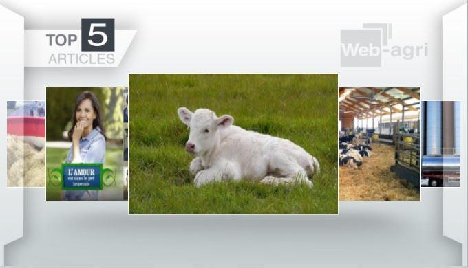 Articles les plus lus sur Web-agri cette semaine. (©Terre-net Média)