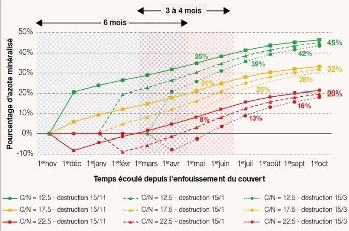 Pourcentage de l'azote des couverts minéralisé en fonction du temps écoulé depuis son enfouissement, pour trois dates de destruction différentes et trois profils de couverts