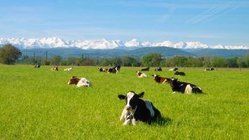 Le financement participatif au service du bien-être des animaux et des sols