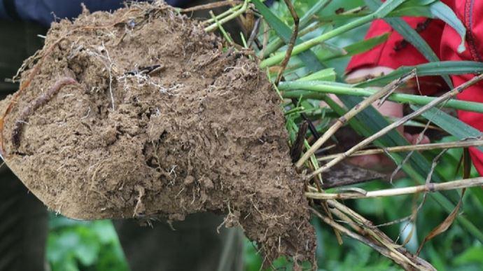 Analyse de terre avec un couvert végétal