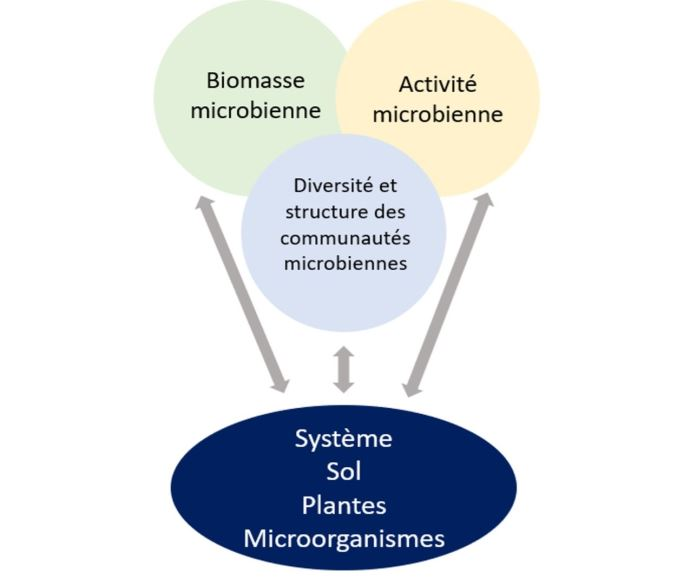 Indicateurs majeurs pour aborder le système sol-plantes-microorganismes