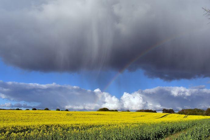 Les pluies retardent les récoltes canadiennes