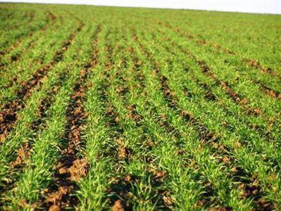 « J'ai une prime de multiplication pour le blé tendre de 24,6€/tonne »