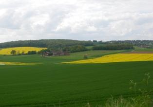 Les surfaces de blé s'étendent