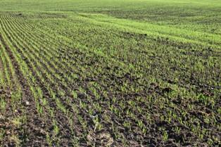 Perturbation des semis au Canada