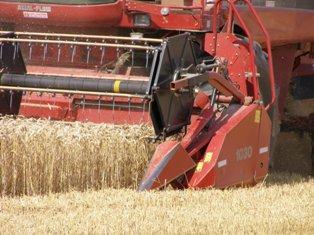 Productions de céréales et de colza en baisse mais toujours d'un bon niveau