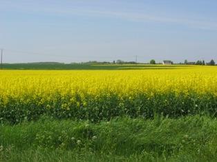 Marché européen du colza: début d'année à la hausse