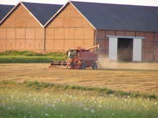 Les prix du blé montent après un achat par l'Egypte