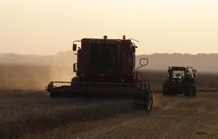 Recul des prix du blé mais la météo reste un facteur de soutien