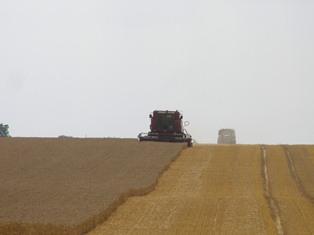 Les prix agricoles en ordre dispersé avant les chiffres de l'Usda