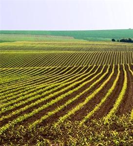 Dopé par l'assurance récolte aux Usa, le maïs est préféré au soja pourtant très cher