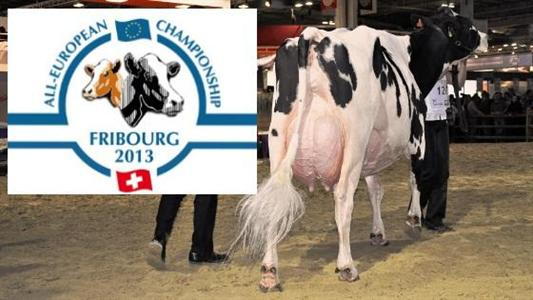 Concours europe Holstein Fribourg Suisse mars 2013