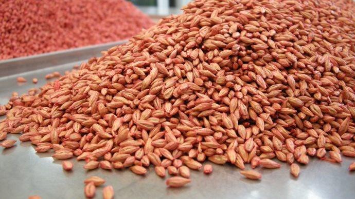 Les traitement de semences efficaces contre les maladies