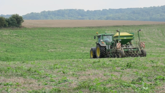Semis de blé sous couvert.