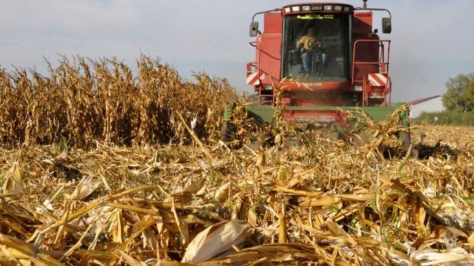 Broyage et incorporation des résidus de maïs réduisent le risque sanitaire
