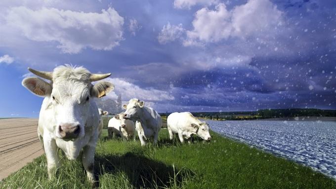 Dans les exploitations agricoles, quelles stratégies d'adaptation au changement climatique?