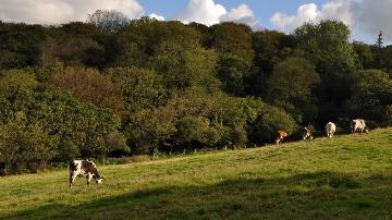 En Bretagne, le confort hydrique des cultures fourragères va se dégrader