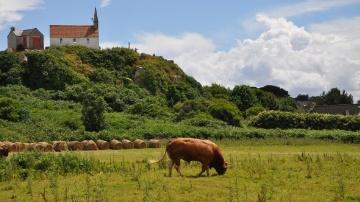 Les systèmes bovins viande devront mieux maîtriser le déficit d'herbe estival