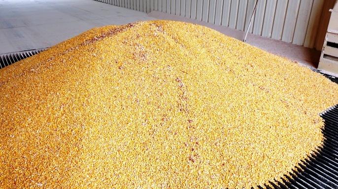 Aire de stockage de maïs