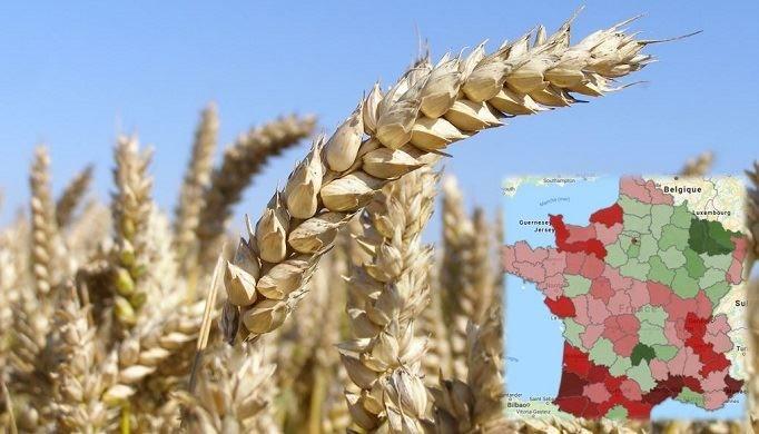 résultats rendements blé aout.JPG