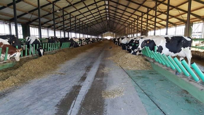 1 000 vaches