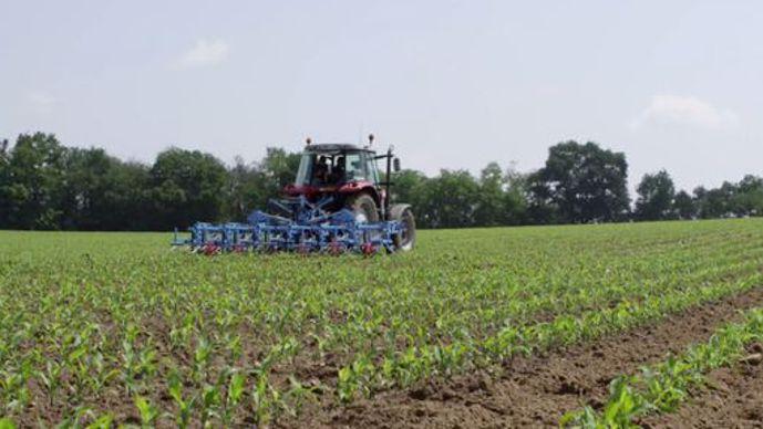 Désherbage mécanique du maïs